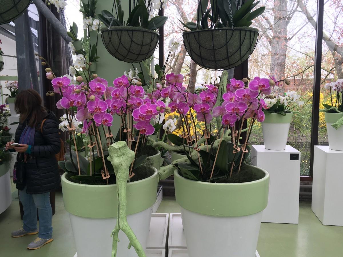 Bio orchidee op Keukenhof!